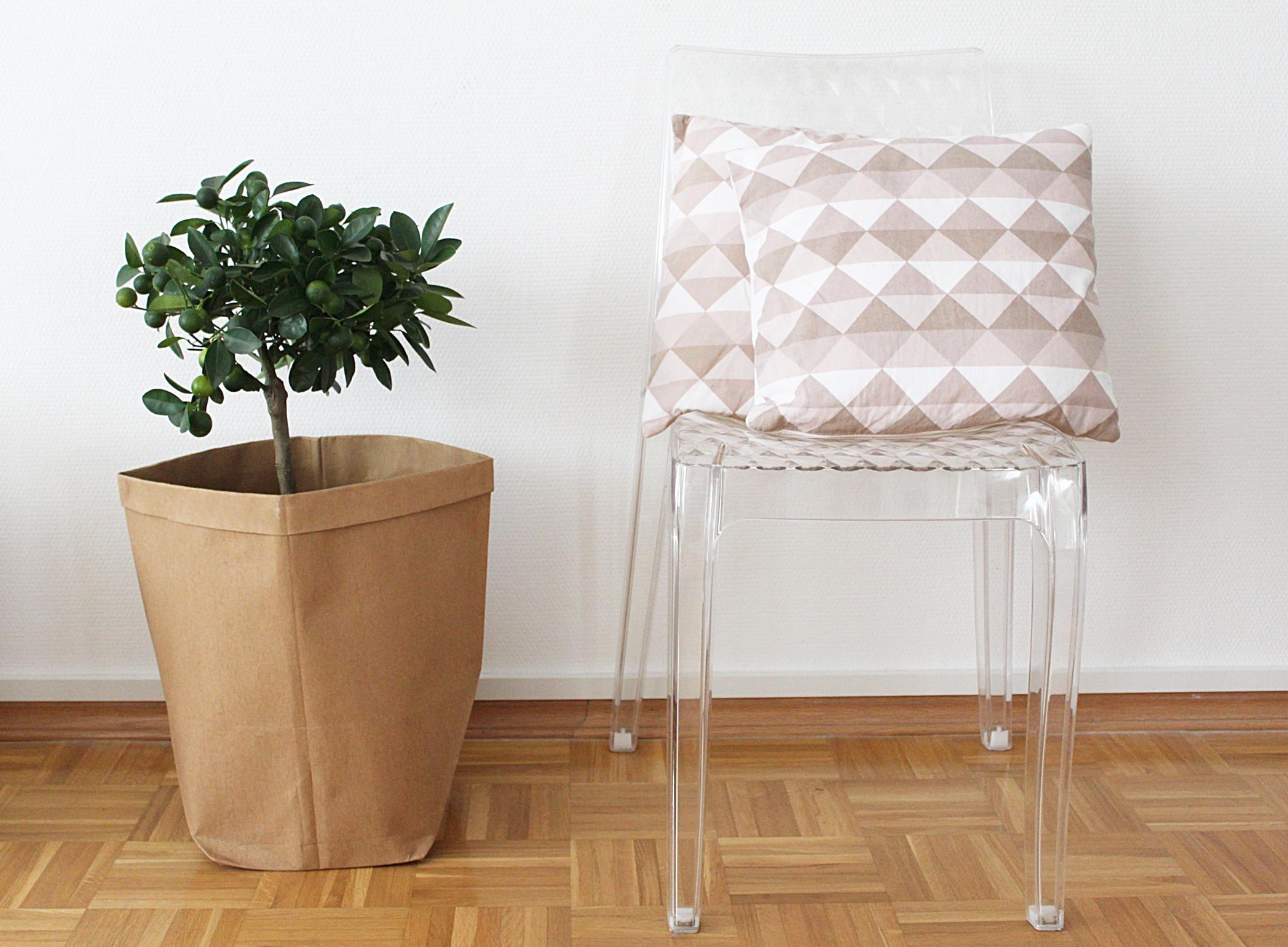 limettenbäumchen + stuhl